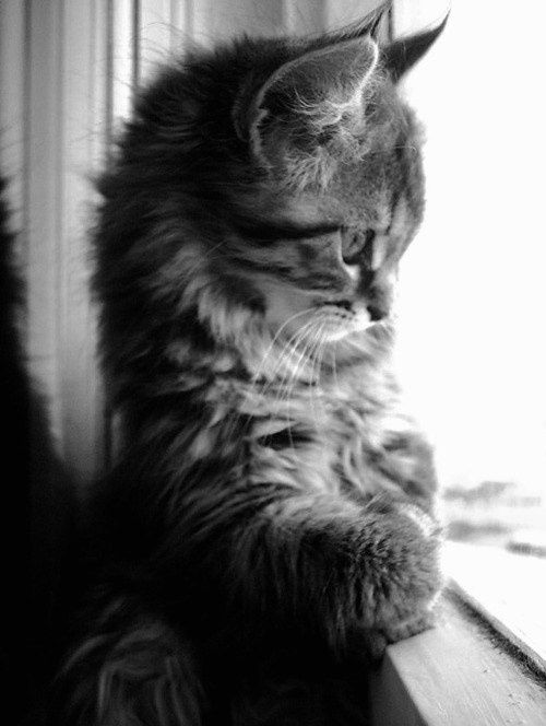 Les chat peuvent être curieux c'est sa qui fait qu'ils sont toujours cette envie de partir.