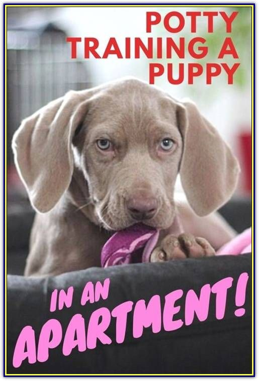 Tips On How To Efficiently Train Your Bad Dog Behavior Potty