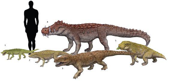 1. Anatosuchus minor 2. Notosuchus terrestris 3 ...