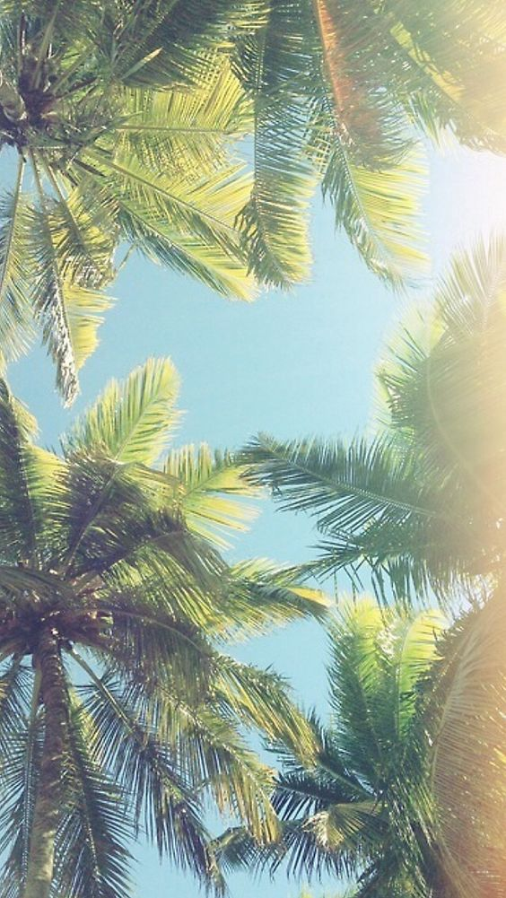 Palm trees iphone wallpaper: