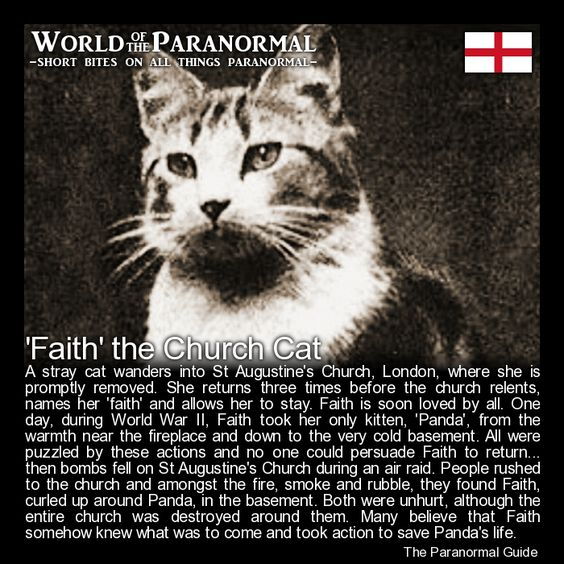 'Faith' the Church Cat   - St Augustine, Watling Street, City of London.  (Destroyed, remains now part of St Paul's Cathedral Choir School)    'World of the Paranormal' are short bite sized posts covering paranormal locations, events, personalities and objects from all across the globe!  Find more great reads at www.theparanormalguide.com: