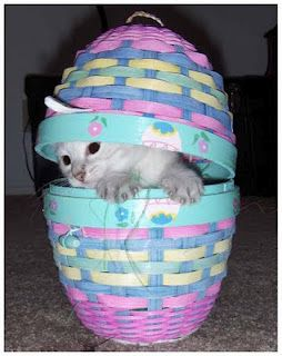 cute easter kitten in a basket!