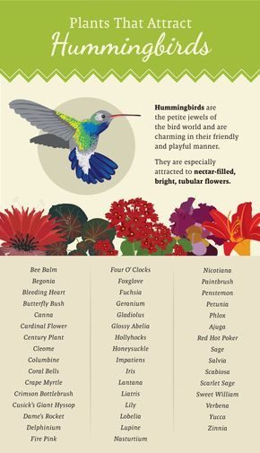 Plants That Attract Hummingbirds - Plant a Pollinator-Friendly Garden