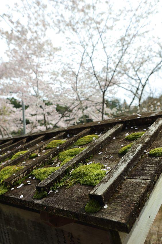 At Ōno-ji