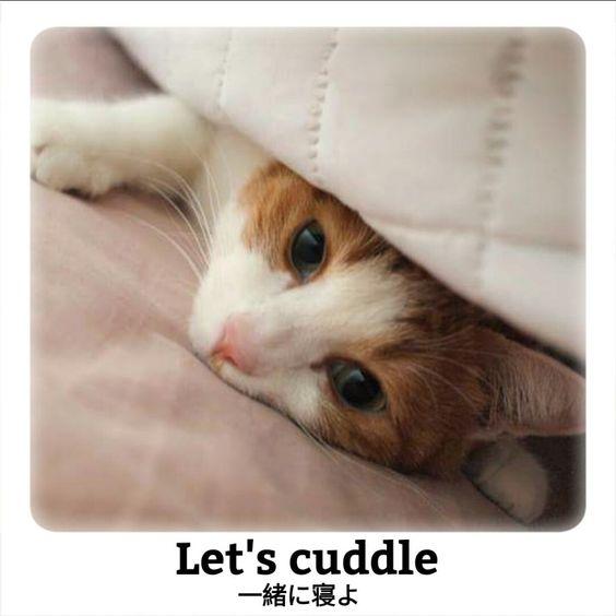癒される猫あるあるで覚える日常英語フレーズ5選