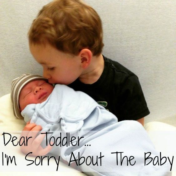 dear toddler I'm sorry about the baby