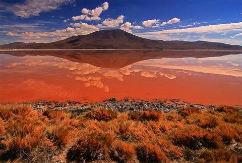 Red lagoon -Laguna Colorada, Bolivia    (by background_62)