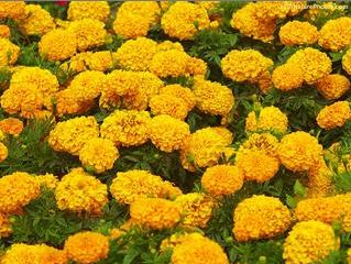 marigolds by eugenia collier lizabeth Lizabeth's experiences in marigolds by eugenia collier essay - 'marigolds' is a  story written by the author eugenia collier it is considered a 'coming of age.