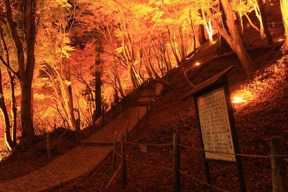 "Aichi Prefecture  : Lighting of ""Kourankei""   (2011香嵐渓ライトアップ)"