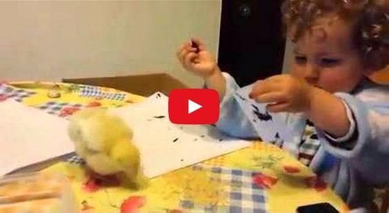 Después de ver a esta adorable niña regañar al pollito,no podréis aguantar la sonrisa | TVEstudio