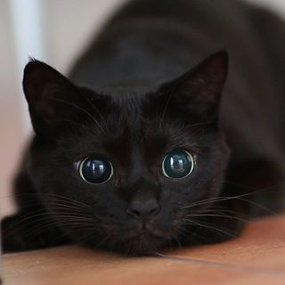 Image result for black cat