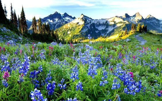 horské krásy vektor