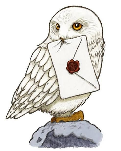 Harry Potter Hedwig Pesquisa Google Harry Potter Owl Harry Potter Print Harry Potter Painting