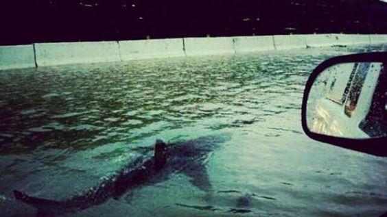 Montagem: tubarão em Nova Jersey