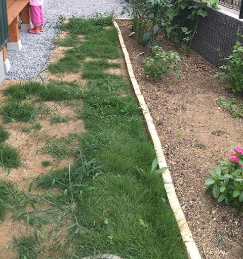 庭を天然芝から 人工芝 へ張替えに挑戦 丁寧な暮らしを楽しむ木の