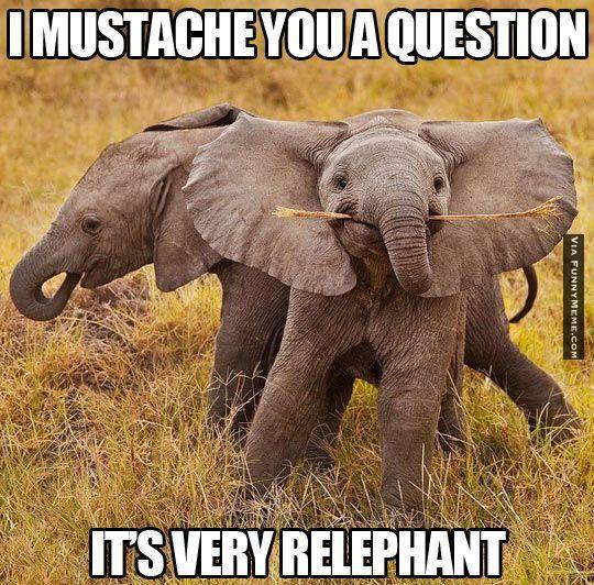 elephant funny mustache animal memes � it�s very relephant