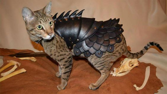 Combat kitty.