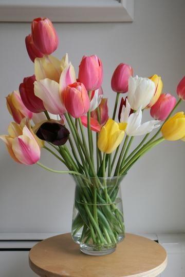 Flores para alérgicos.