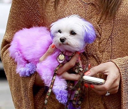 Love it or Hate it? #pinkpuppy