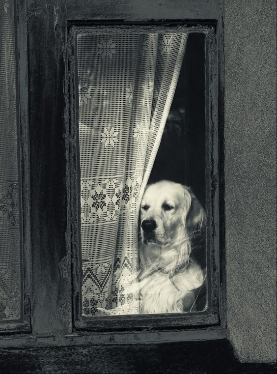 A dog behind the window by Ruda Stancik on 500px