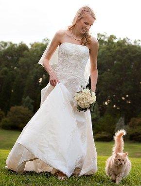 Animais no casório