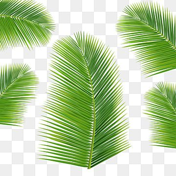 Leaf Png Images Vector And Psd Files Free Download On Pngtree Coconut Leaves Leaf Clipart Coconut Vector