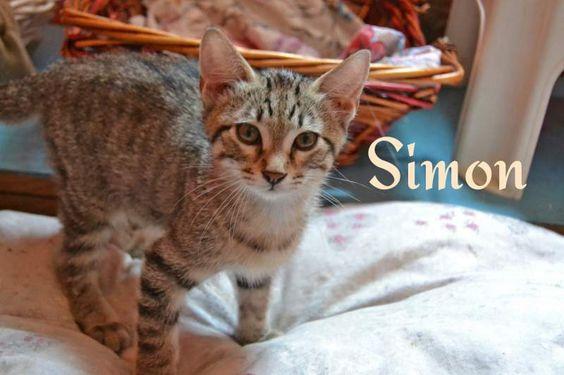 Regalo - adozione gattino tigrato