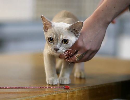 Cat show: Hold it, buster