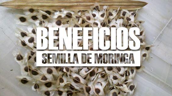 10 Beneficios De La Semilla De Moringa Para Qué Sirve Youtube Semilla De Moringa Moringa Beneficios Moringa