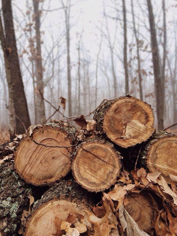 Árvores abatidas.