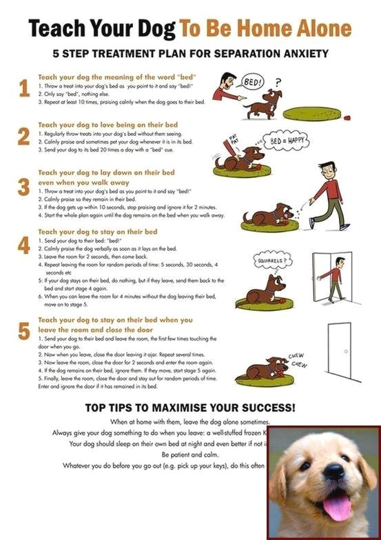 House Training A Puppy Youtube And Dog Training Courses College