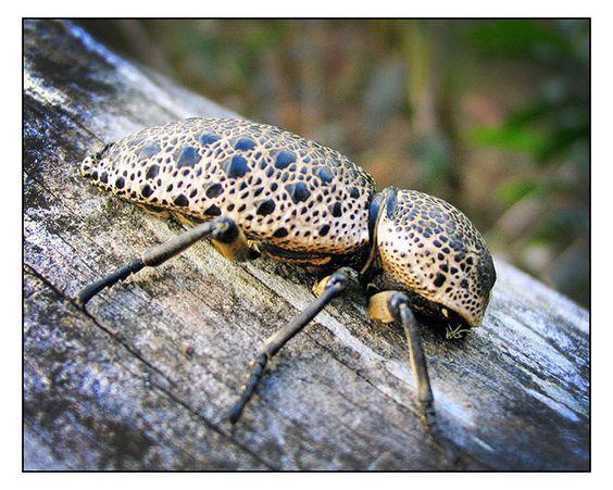 rare and bizarre little bug