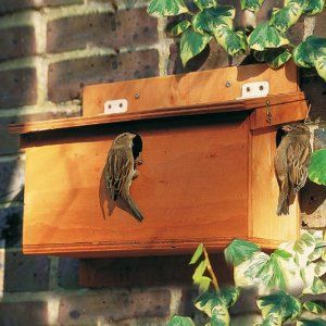 3er nistkasten f r sperlinge birds butterflies bats. Black Bedroom Furniture Sets. Home Design Ideas