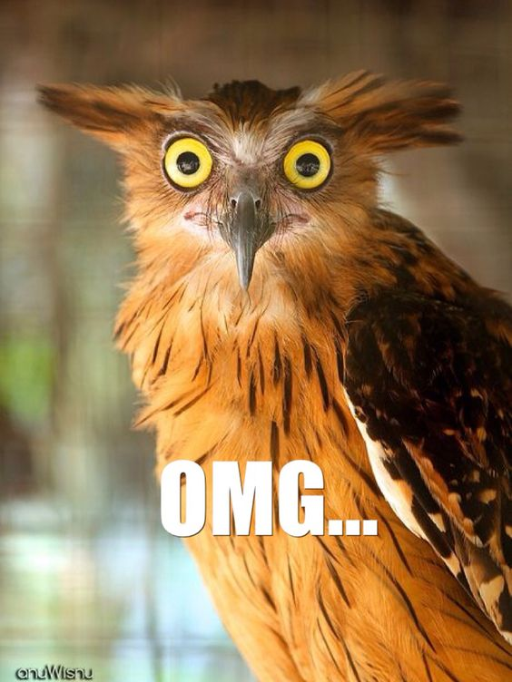 Lol that owls face!