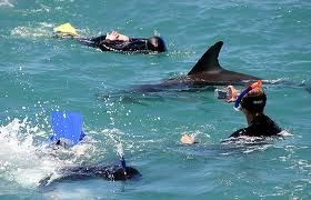 Swimming with wild dolphins i Kaikoura, Nz was one of my favorite experiences.