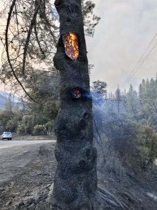 Waarom al die bosbranden wereldwijd