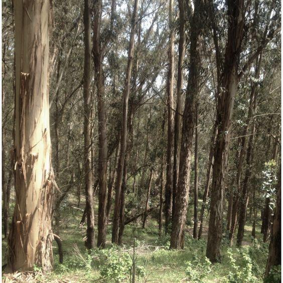 Alvarado Park trail