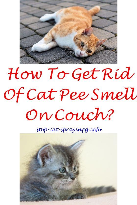 4417a4504ddf167a9c41f5855d5668e7 - How To Get Rid Of Cat Spray Smell Under House