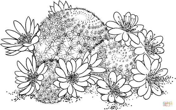 Rebutia deminuta or crown cactus coloring page for Flower crown coloring page