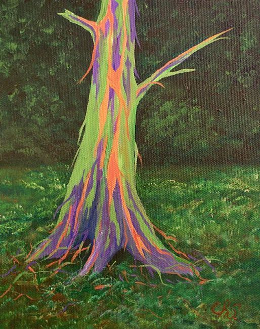 Rainbow Eucalyptus Tree Eucalyptus Tree And Rainbows On