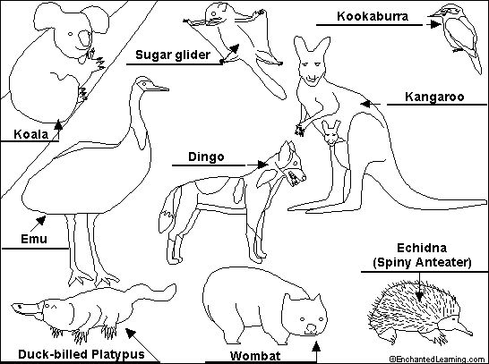 coloring pages australian animals - photo#9