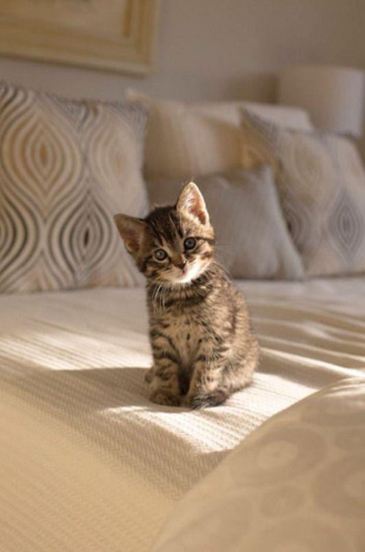 Idea By Hiromi On Kawaiiiiii In 2020 Cute Baby Animals Cute