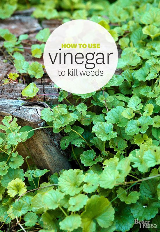 Weed vinegar and window cleaner on pinterest for How to get rid of weeds in garden