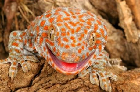 20 colorful lizards on earth - China.org.cn