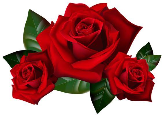 Las rosas rojas PNG imagen prediseñada: