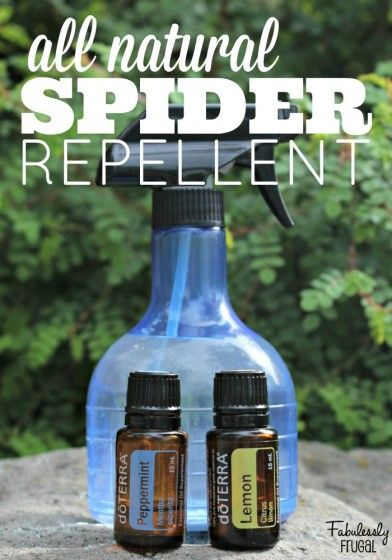 Did you know essential oils can help you get rid of spiders and other annoying insects in your home?