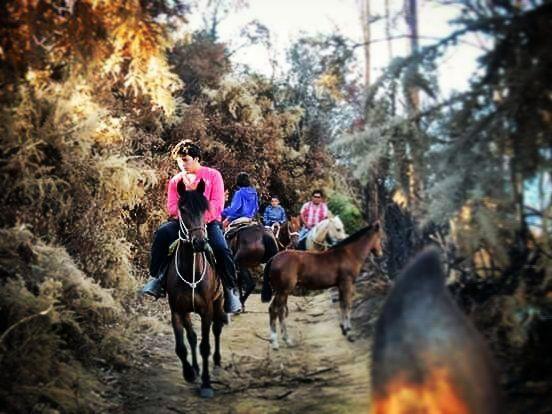 Check out our Surf clothing here! http://ift.tt/1T8lUJC Cuando alguien se cruza por tu vida se puede quedar y formar parte ella o simplemente te dejara una leccion para una proxima vez . #sur #sunset #horse #horsebackriding #aloha  #keepitsimple #thesearch #surflife #yeah #noproblems #goodlife #lifesbetterinboardshorts #trails #memories #longlife #love #earth #summer #beingahero