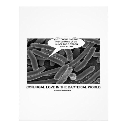 electron microscope bacteria conjugation | Conjugal Love In The Bacterial World Letterhead Template