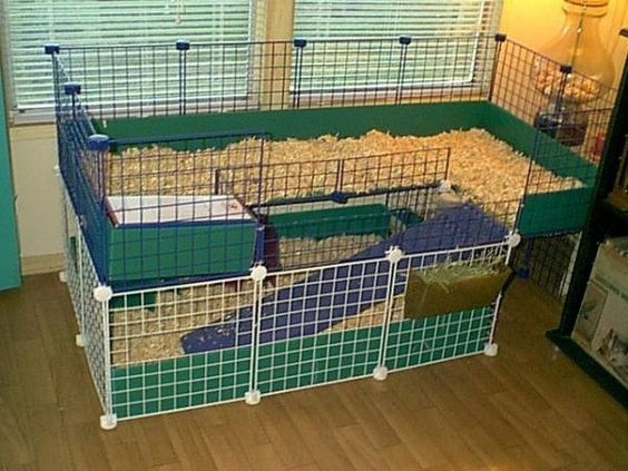 Our 2 story c c cage cole pinterest cavy photos for Guinea pig cages for two