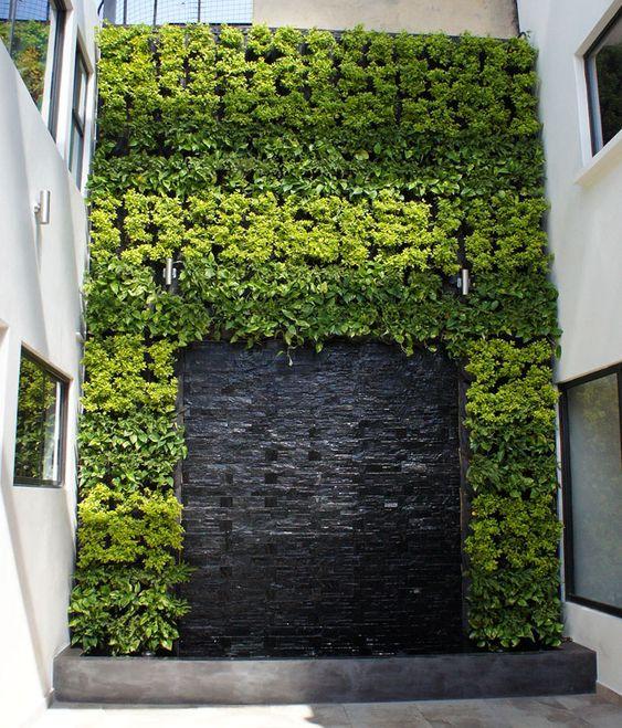 Jardín Vertical Vallejo | Cara de Planta